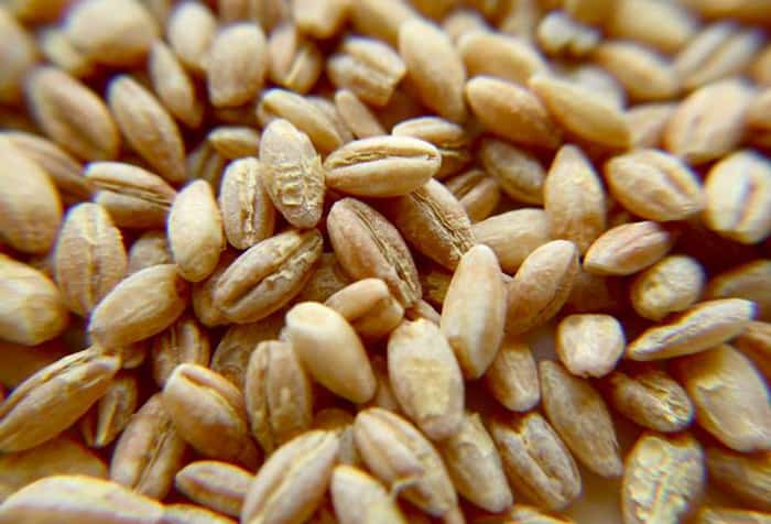 What Is Barley
